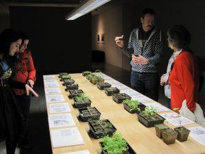 Adoption of medicinal plants