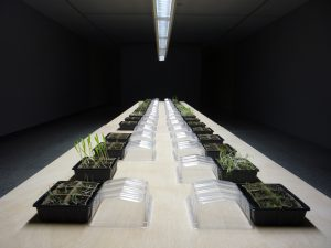 Medicinal plants in Artium
