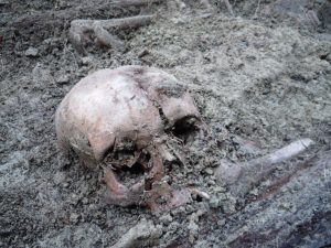 Skull from the mass grave