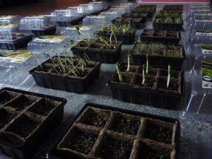 Germinating plants in Artium